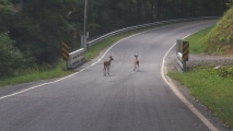 <h5>Little Deer While out Driving Around</h5>