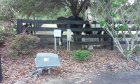 <h5>Gate in beverly hills, FL horses helping</h5>